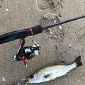 ヨッシーさんの三重県津市での釣果写真