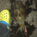 soldier fishさんの香川県三豊市での釣果写真