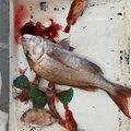 #べる坊#さんの熊本県での釣果写真
