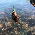 木村さんの山形県での釣果写真