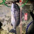 tomさんの三重県での釣果写真
