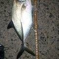 孤高の南国アングラーさんの鹿児島県での釣果写真