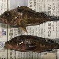 k2さんの広島県での釣果写真