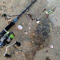 ジョーさんの三重県での釣果写真
