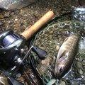 斑さんの熊本県での釣果写真