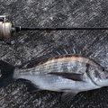 シンデレラさんの富山県での釣果写真