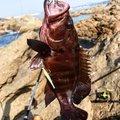 マルスさんの鹿児島県での釣果写真