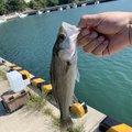 Genさんの宮城県牡鹿郡での釣果写真