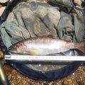 オミさんの富山県での釣果写真