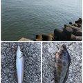 キラままさんの三重県での釣果写真