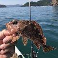 トシローさんの三重県での釣果写真