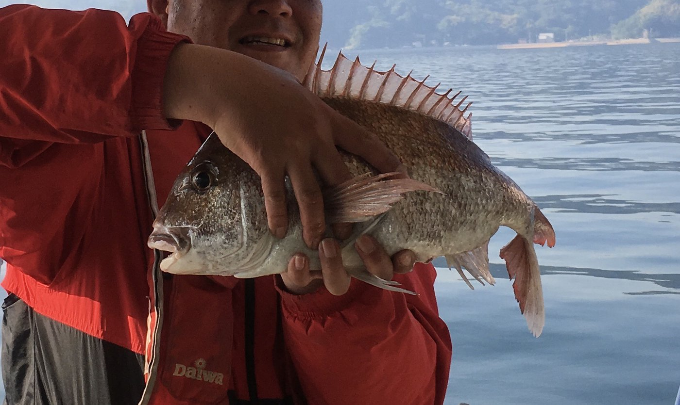 よっちゃんさんの投稿画像,写っている魚はマダイ