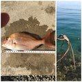 まーくんさんの兵庫県での釣果写真
