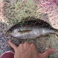 脱力感さんの長崎県での釣果写真