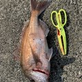 ひろしげさんの長崎県五島市での釣果写真