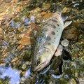 きーくんさんの新潟県村上市での釣果写真