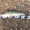su-さんの愛媛県での釣果写真