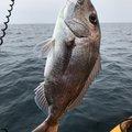 DAIMASさんの長崎県西海市での釣果写真