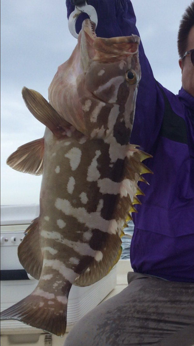 ひろちゃんさんの投稿画像,写っている魚はアラ