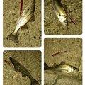 アスパラさんの福岡県福岡市での釣果写真