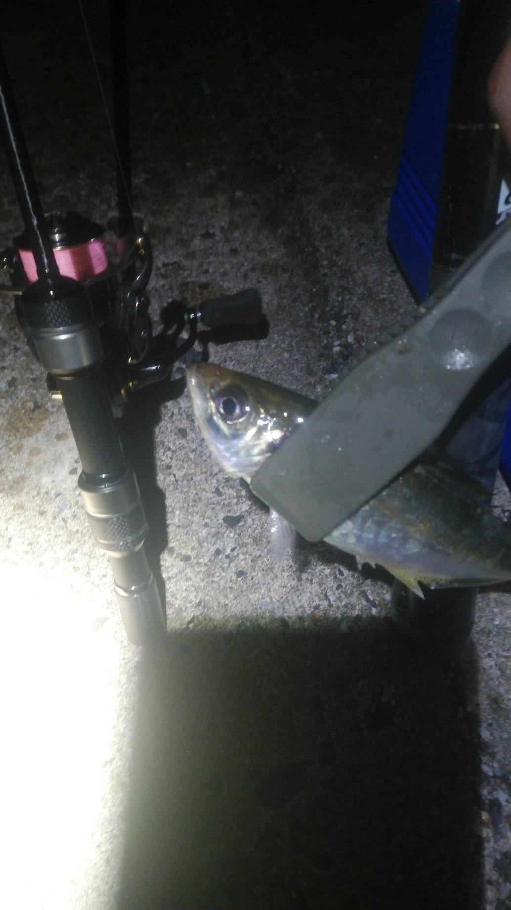 むつさんの投稿画像,写っている魚は