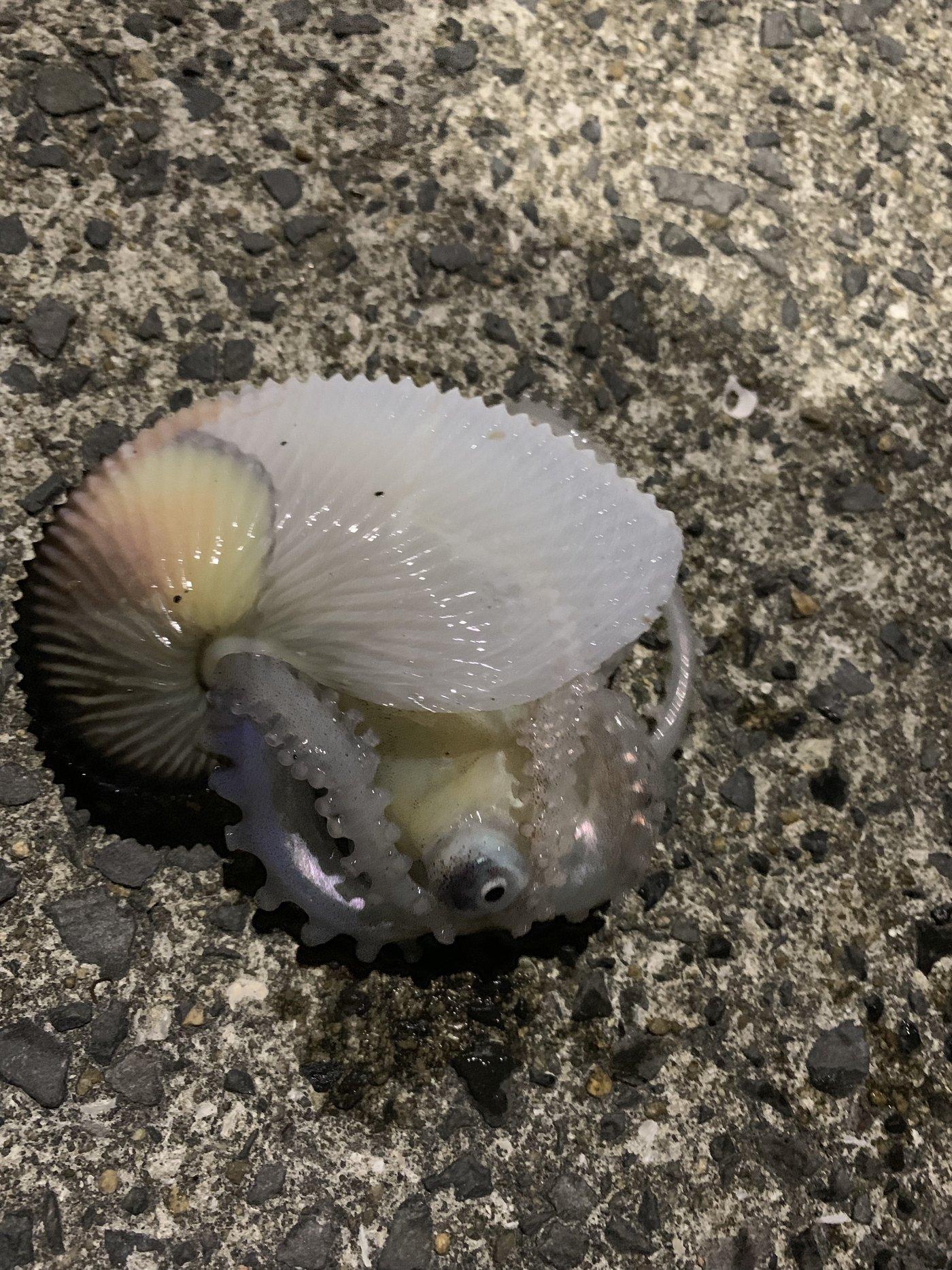 岡村さんちの涼太くんさんの投稿画像,写っている魚は