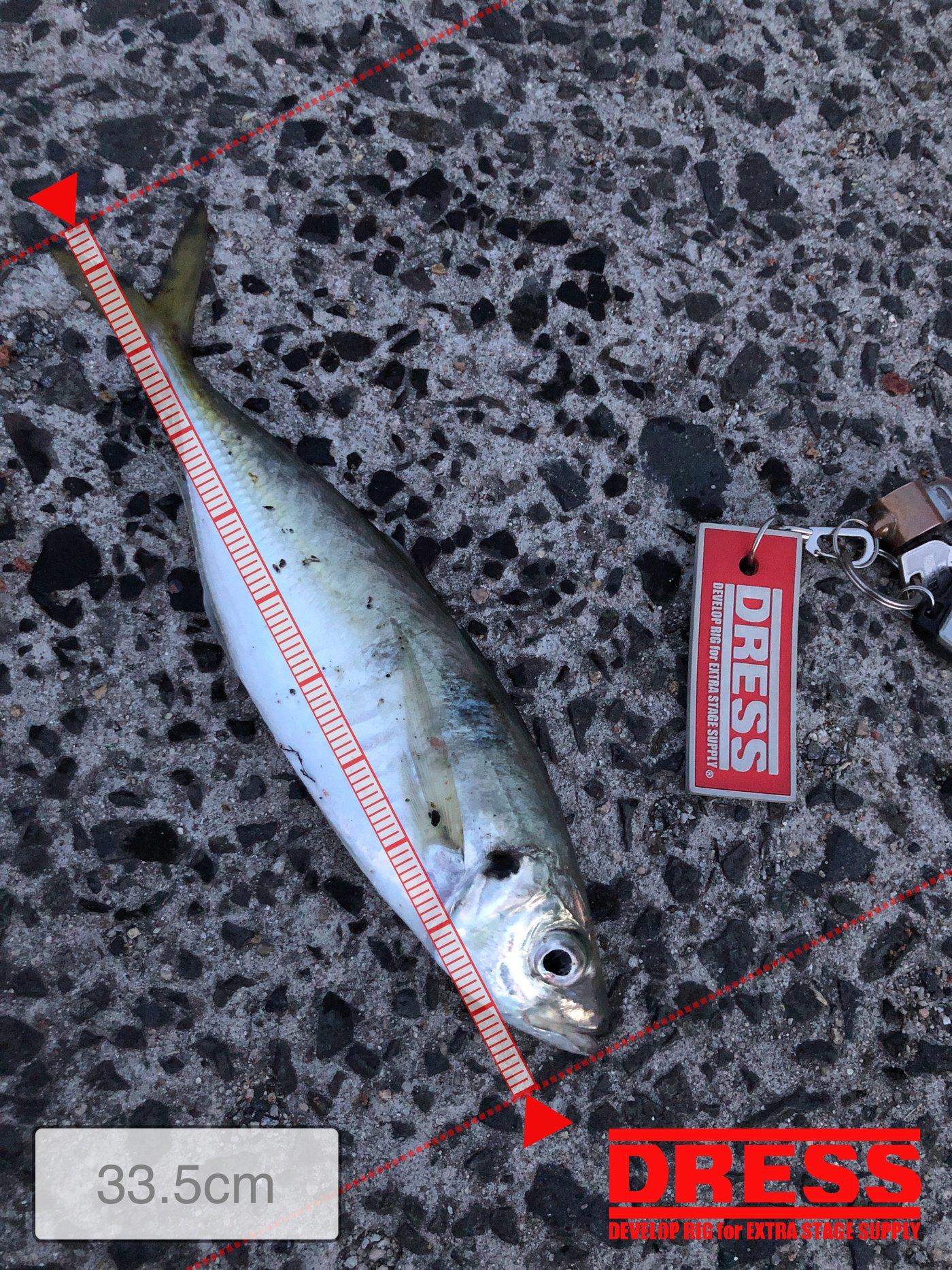 アオリイカオ🦑さんの投稿画像,写っている魚はアジ