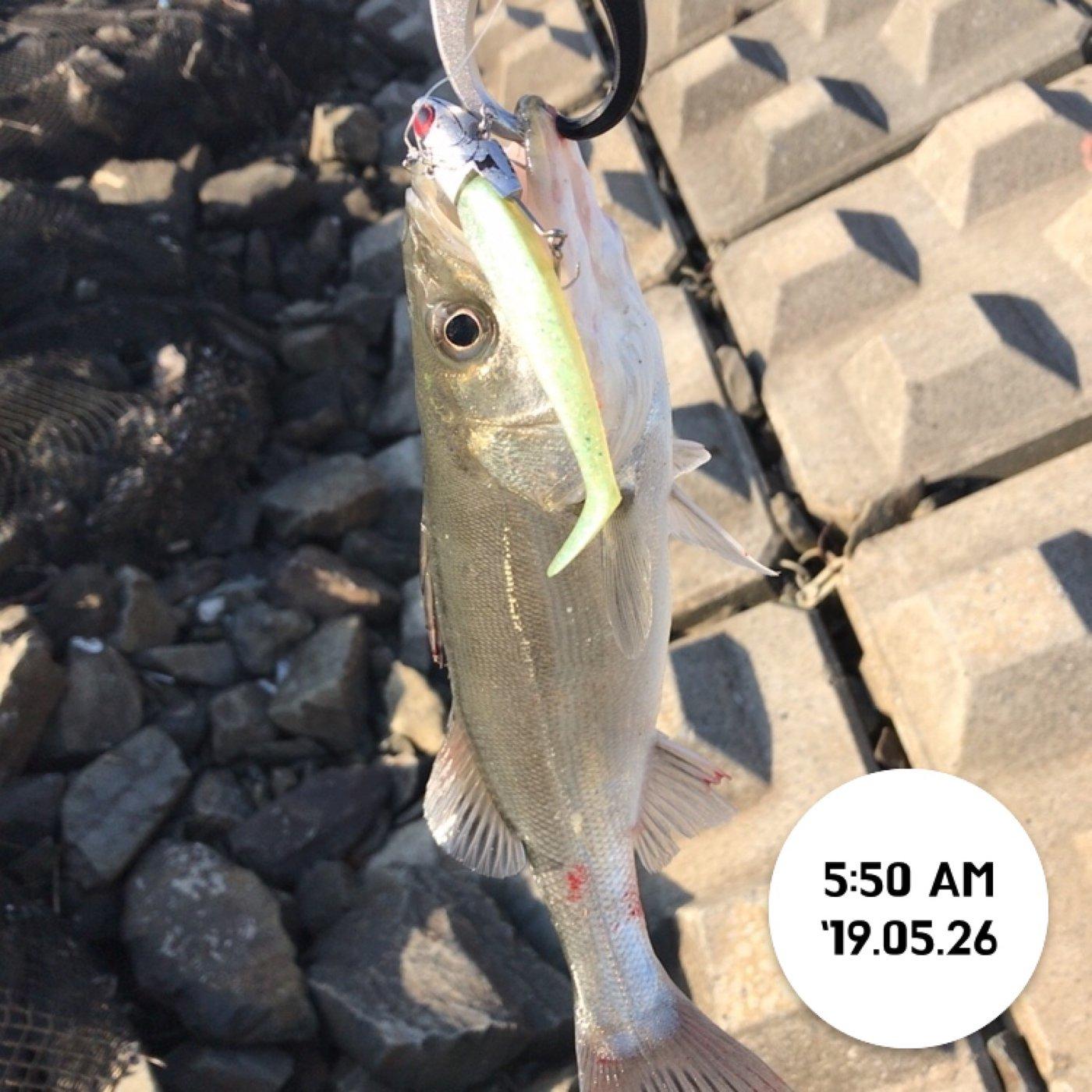 てつこさんの投稿画像,写っている魚はスズキ