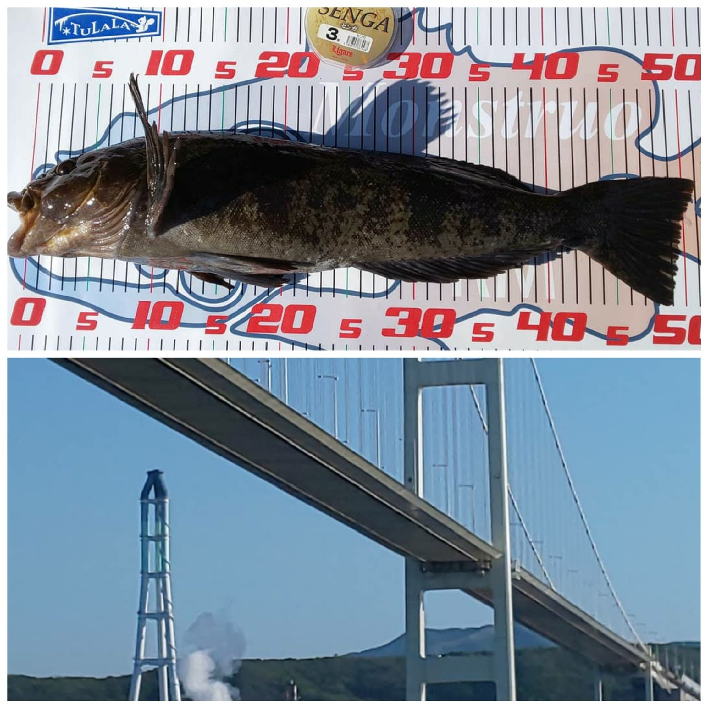hide(SWS)さんの投稿画像,写っている魚はアイナメ