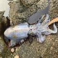 ヒサカールさんの熊本県水俣市での釣果写真