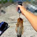 烏賊野郎さんの大分県別府市での釣果写真