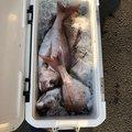 ナッツさんの新潟県上越市での釣果写真