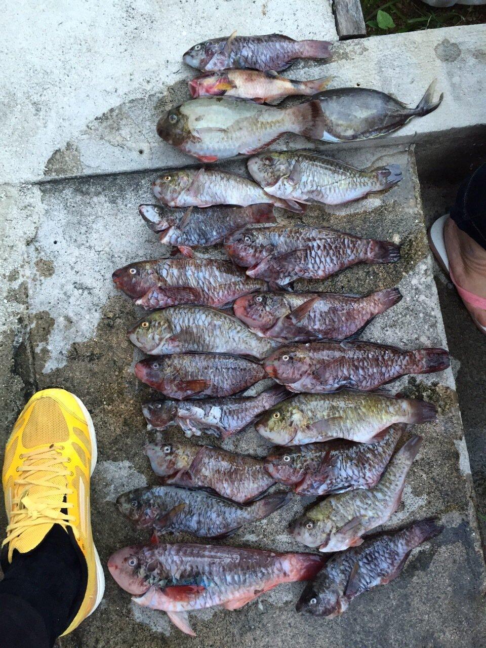 イラブチャーさんの投稿画像,写っている魚はブダイ