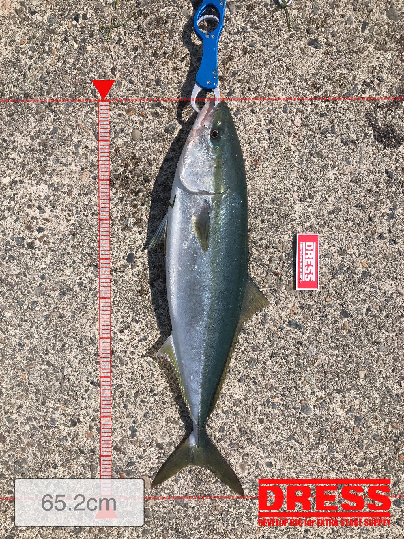 ドカさんの投稿画像,写っている魚はブリ