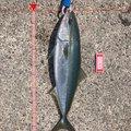 ドカさんの石川県珠洲市での釣果写真