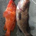 かわぽんさんの和歌山県新宮市での釣果写真