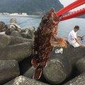 ゆぜさんの静岡県賀茂郡でのカサゴの釣果写真