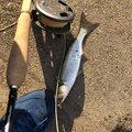 hirokiさんの埼玉県戸田市での釣果写真