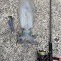 はげさんの鹿児島県垂水市での釣果写真