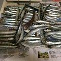 Musubi Susonoさんの宮城県での釣果写真