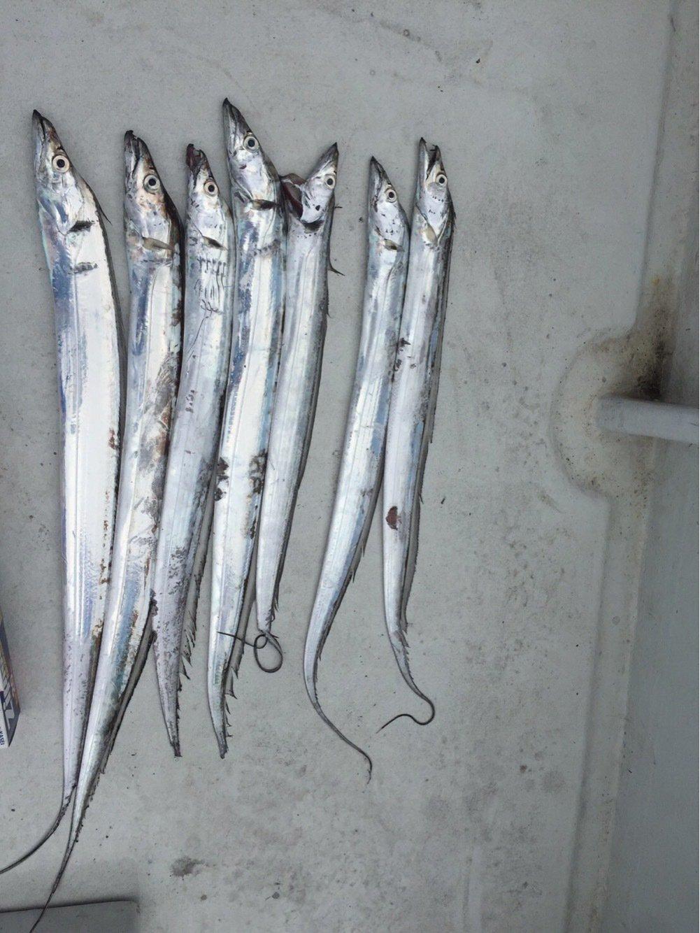 釣れんパンマンさんの投稿画像,写っている魚はブラックバス