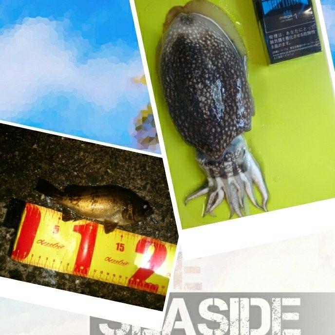 rin82さんの投稿画像,写っている魚はシリヤケイカ,メバル