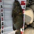 すらおさんの新潟県魚沼市でのスモールマウスバスの釣果写真