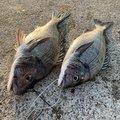 きたさんさんの新潟県上越市での釣果写真