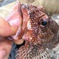 iskwtkさんの長崎県対馬市での釣果写真