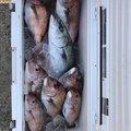ゆうじさんの石川県珠洲市での釣果写真