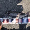 こーへーさんの広島県での釣果写真