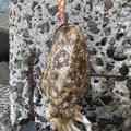 ゴンさんの長崎県北松浦郡での釣果写真