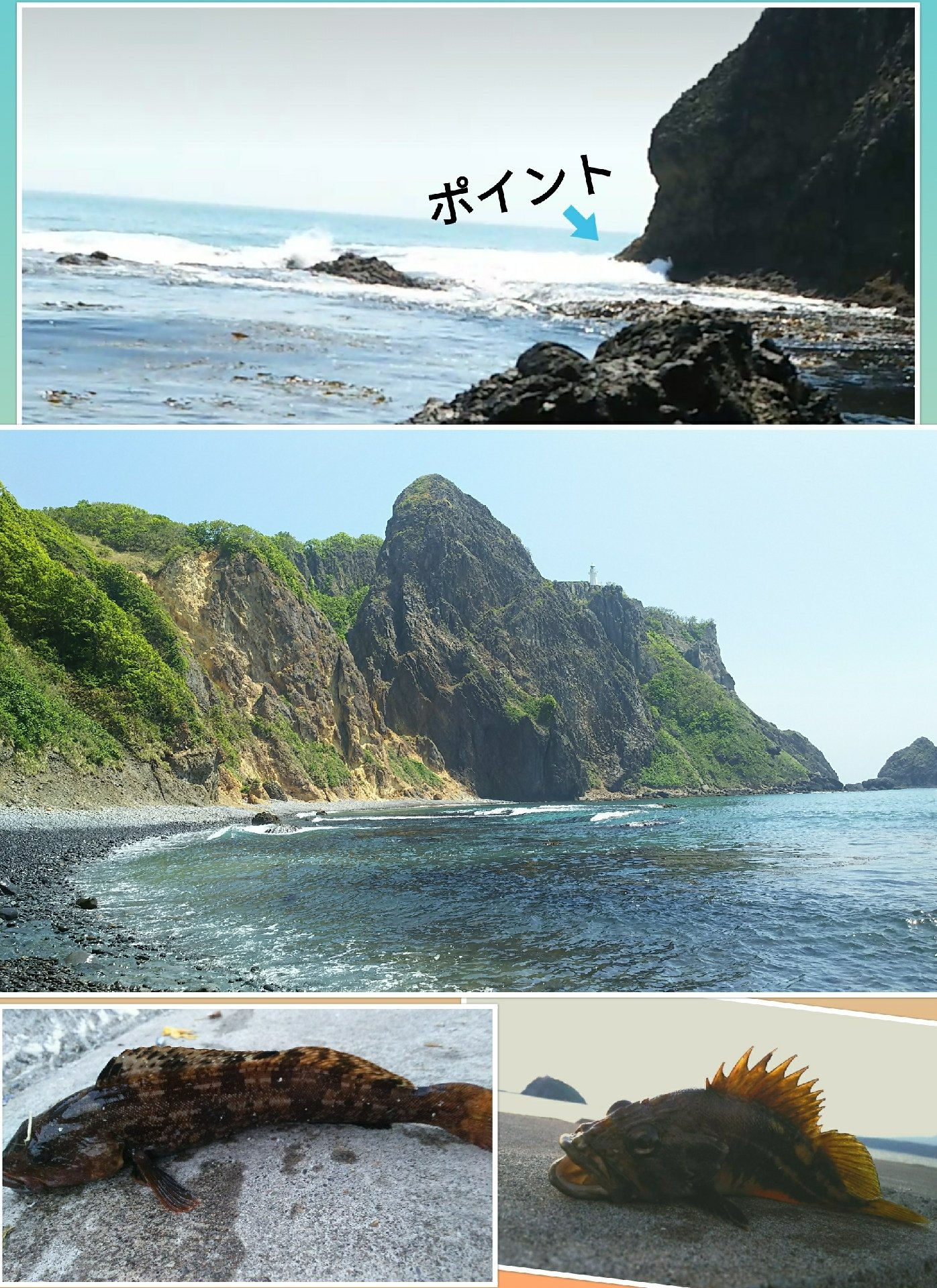 かなぼうさんの投稿画像,写っている魚はアイナメ,シマゾイ