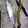 ta-chiさんの茨城県での釣果写真